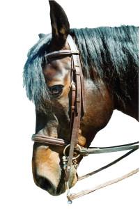 Abb. Pferdekopf mit HSH-Center-Kandare