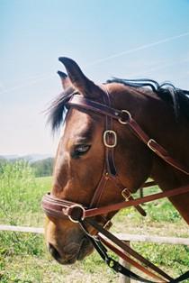HSH-Schulzaum in braun am Pferd