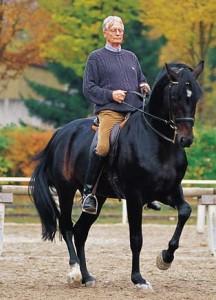 Stahlecker-Pferdeausbildung