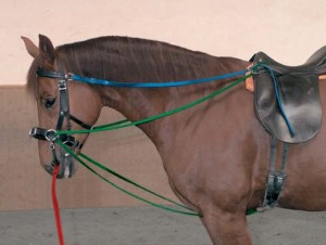 Top reins and lower reins